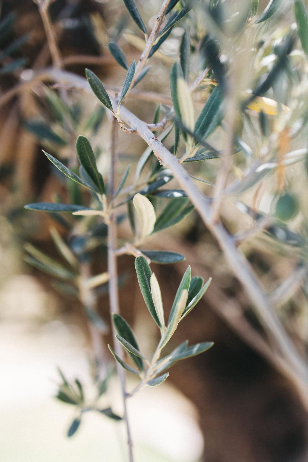 mariage en Provence sous un champ d'olivier et de lavande au domaine de Patras. Empreinte Ephémère wedding planner Provence, paris et normandie